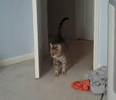 catfinal
