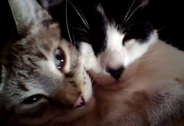 kitties hug