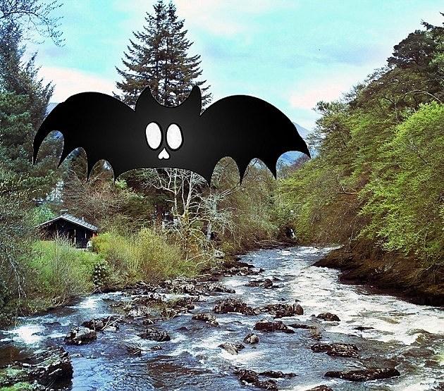 river bats