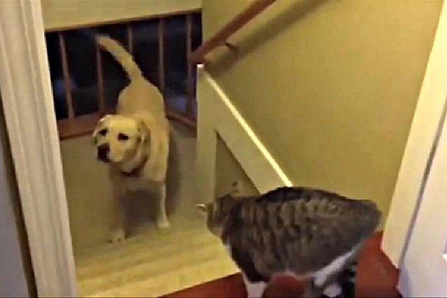 Dog Won't Pass Cat