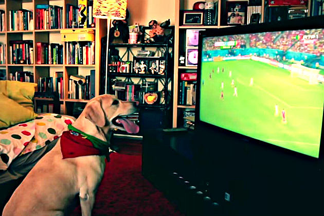 Soccer Loving Dog